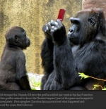 صورة القرد والموبايل