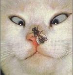 صورة القط والذبابة