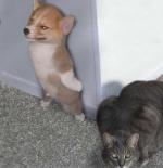 صورة الكلب والقط