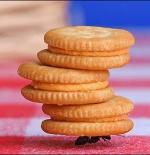 صورة النملة وحمل البسكويت