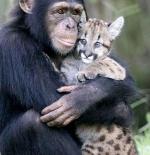 صورة حيوانات الغابة الاصدقاء