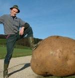 صورة البطاطس الضخمة