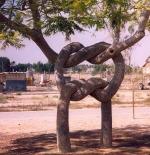 صورة الشجرة العجيبة