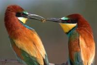 صورة الطيور الغريبة