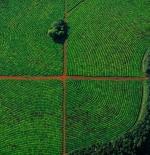 صورة الزراعة في الأرجنتين