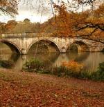 صورة لجمال الخريف