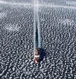 صورة سفينه كاسحة الجليد