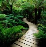 صورة ممر خشبي في الطبيعة