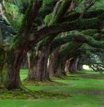 صورة الاشجار الجميلة
