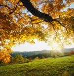 صورة اشجار جميلة