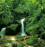 صورة الغابة الرائعة