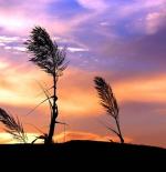 صورة الطبيعة الخلابة
