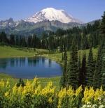 صورة الاشجار والجبال