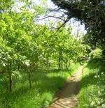 صورة الاشجار
