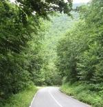 صورة الاشجار في الطبيعة