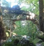 صورة الغابة الرهيبة