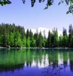صورة الاشجار والنهر الجميل