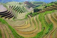 صورة الارض الزراعية الجميلة