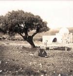صورة قديمة نادرة لفلسطين