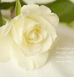 صورة الورده البيضاء