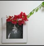 صورة لوحة وزهرة