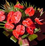 صورة زهرة Anthurium