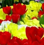 صورة ورود ملونة