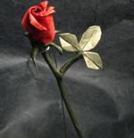 صورة وردة حمراء جميلة