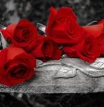 صورة ورد احمر