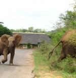 inside Kruger Gate
