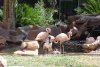 طيور الفلامنجو في لاس فيغاس