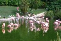 طيور الفلامنجو في ميامي