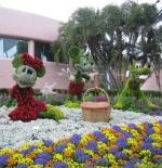 المهرجان و حديقة الزهور