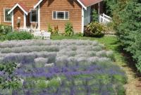 مزارع جميلة في واشنطن