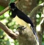 الطيور في حديقة غابة شلالات اجوازو