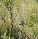 Bird at Cotopaxi