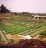 مزارع في جوانزو