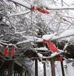 صورة للثلج في شنغهاي