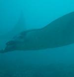 Giants of the deep