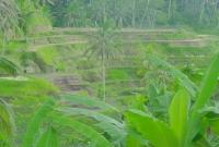 الخضرة في بالي