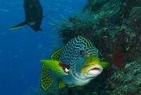مخلوقات تحت اعماق البحار