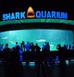 أسماك القرش العالمية