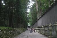 صورة غابة الارز في طوكيو