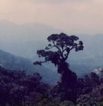 مرتفعات جبال جنتنج