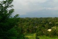 غابات في مدينة كاندي