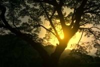 منظر رائع لغروب الشمس خلف الاشجار