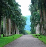 Palm avenue in the Botanical garden close to Kandy