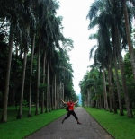 Palm avenue at the Botanical garden close to Kandy