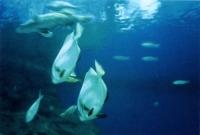اعماق البحار في باتايا