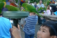 تغذية الطيور البرية